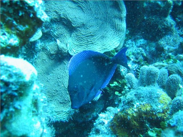 Curacao 2009