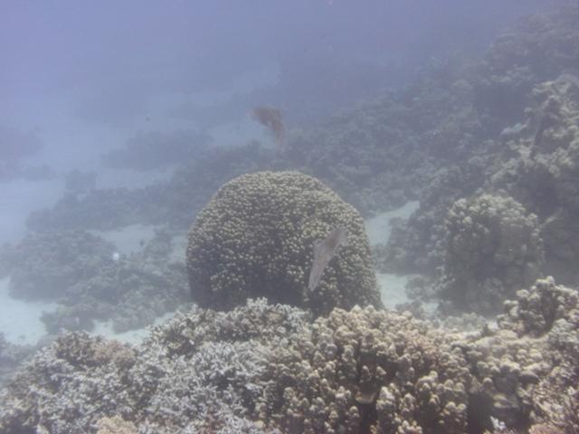 Hurghada 2013